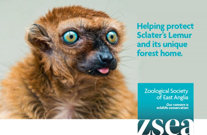 Image of example of Zoological Society of East Anglia's fundraising message