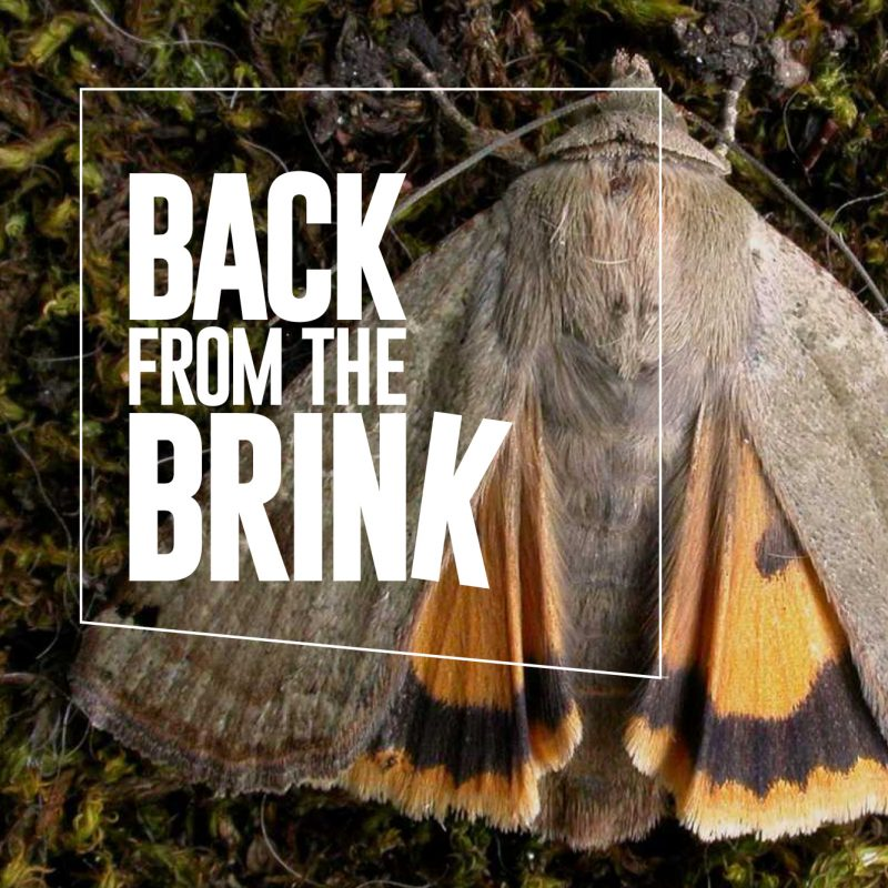 An image of the Back from the Brink logo as part of our pitch win story
