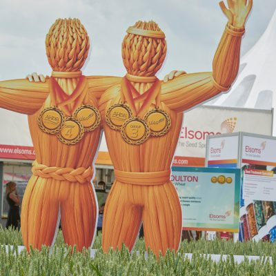 An image of Elsoms wheat campaign cutouts