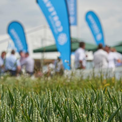 Image of crop and flags on Corteva stand at Cereals 2018